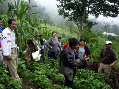 People walking through the forest in Guatemala